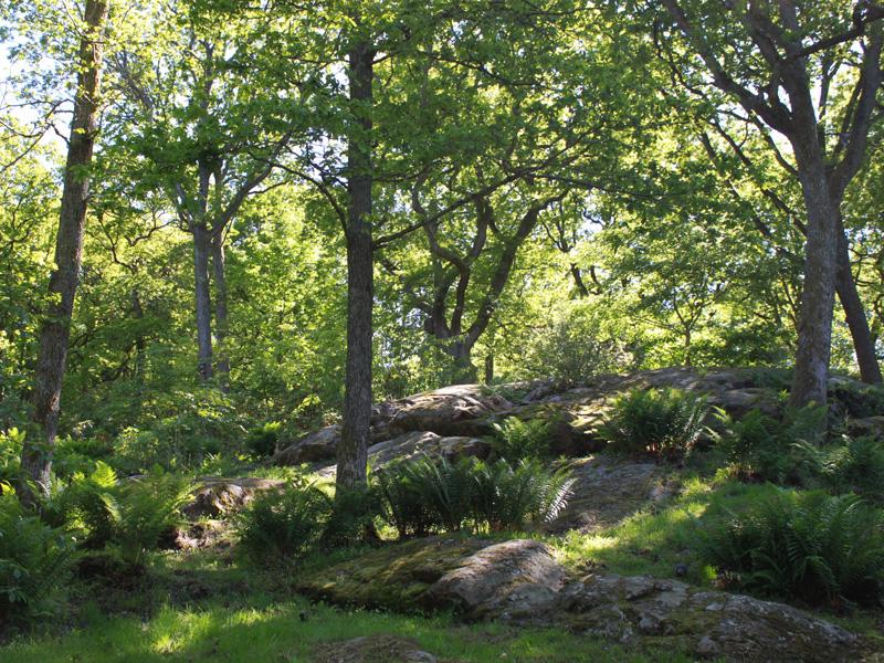 Gothenburg-Botanic-Garden-2