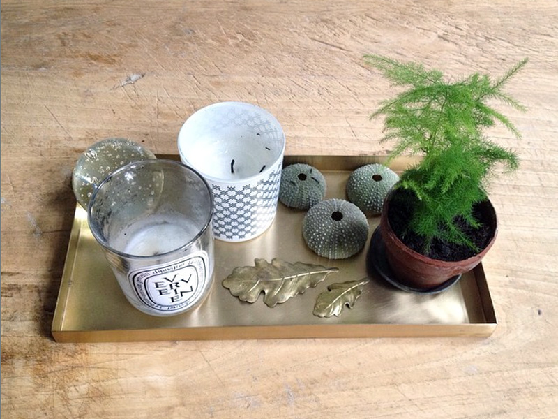 mini-asparagus-plant
