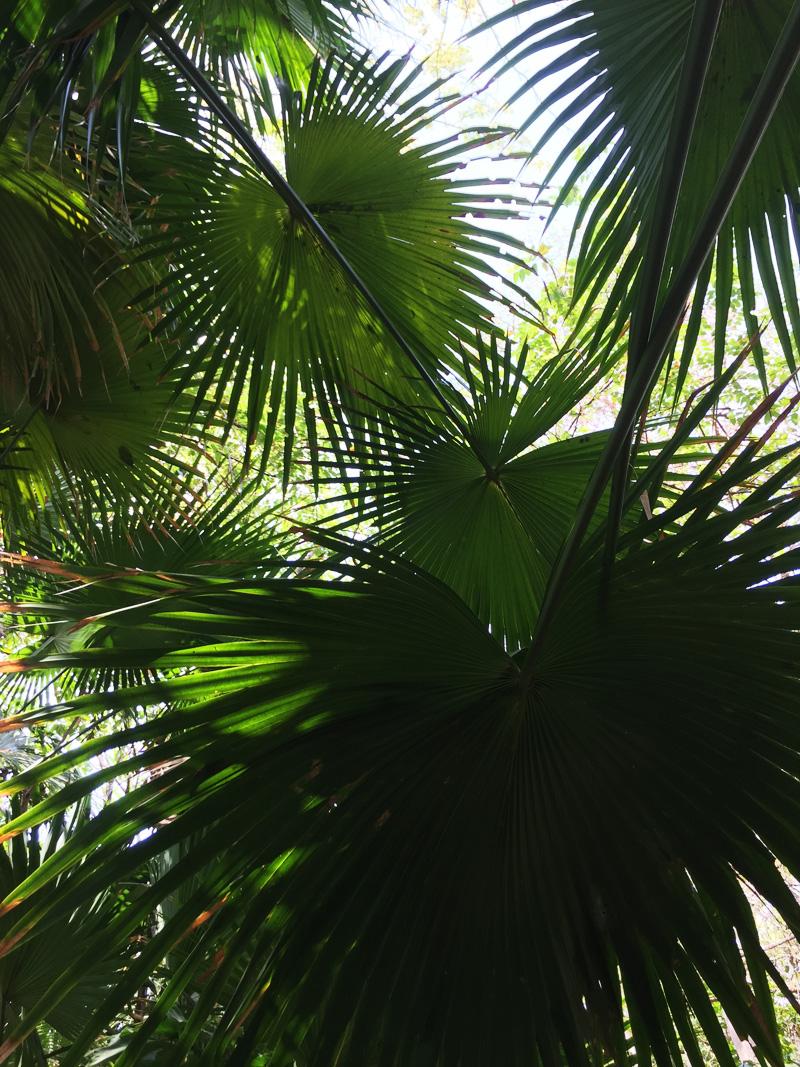 RosyCheeks-Blog-Costa-Rica-Latitude-10-garden