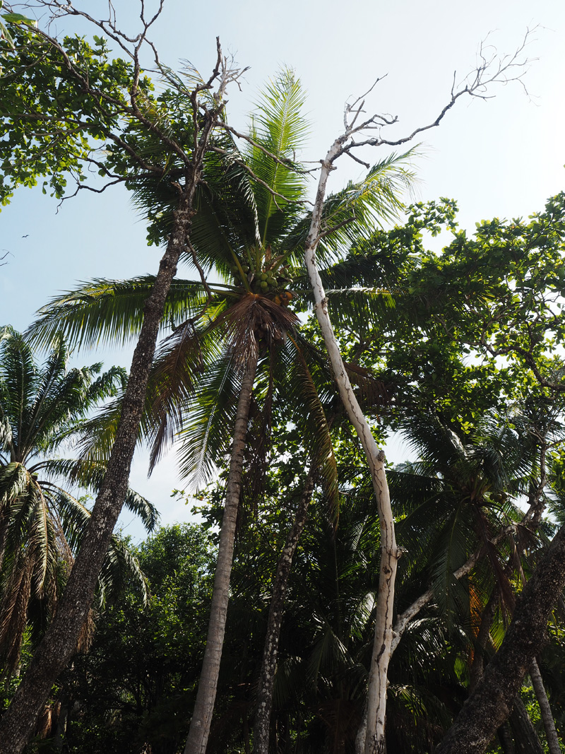 RosyCheeks-Blog-Costa-Rica-Montezuma-Beach-palm-trees