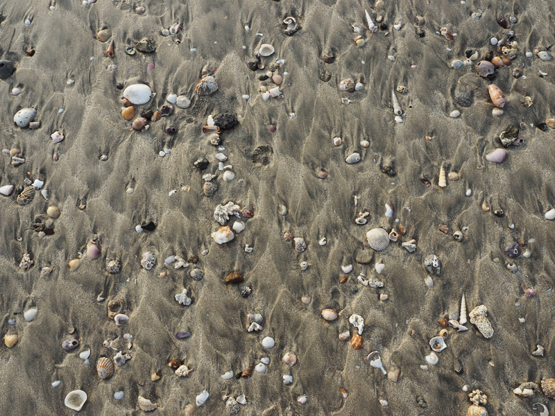 RosyCheeks-Blog-Costa-Rica-Tamarindo-beach-shells