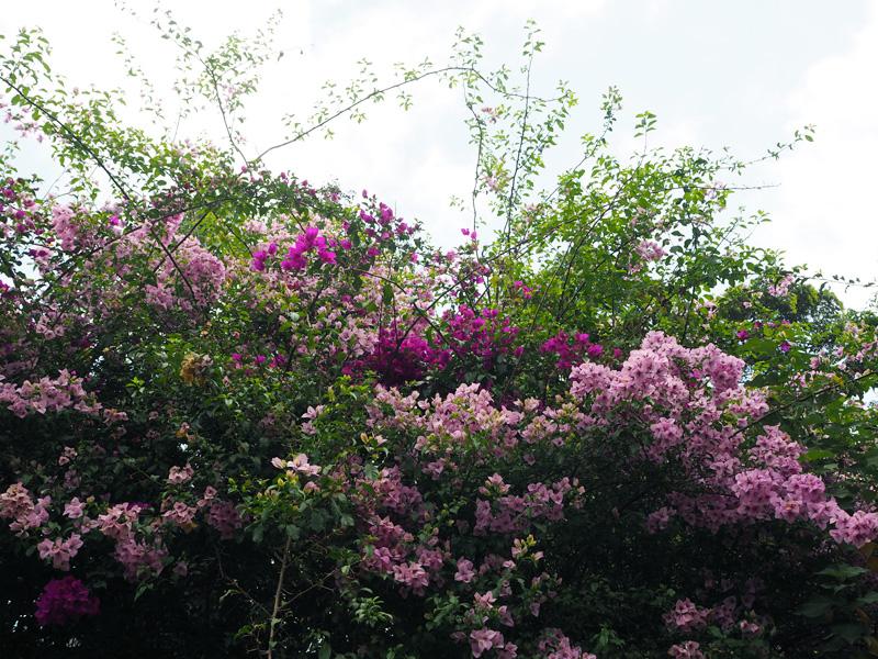 Rosycheeks-blog-Costa-Rica-Monteverde-Hotel-Belmar-3