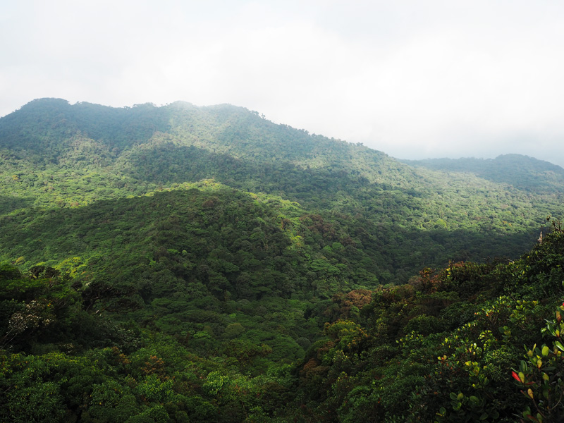 Rosycheeks-blog-Costa-Rica-Monteverde-mountain