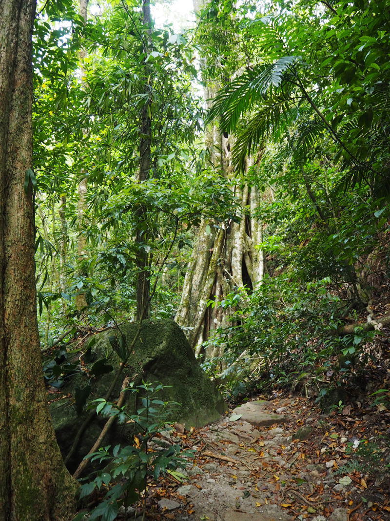 Rosycheeks-blog-Costa-Rica-Monteverde-trail