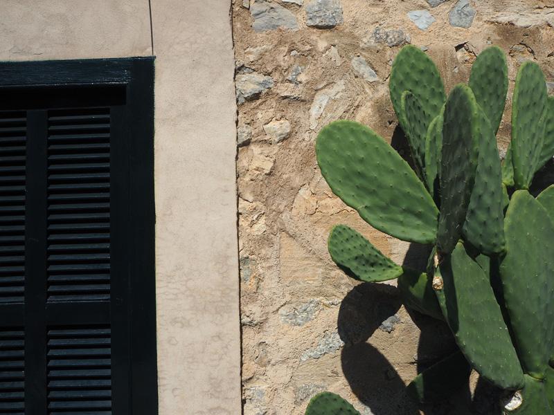 rosycheeks-mallorca-cactus