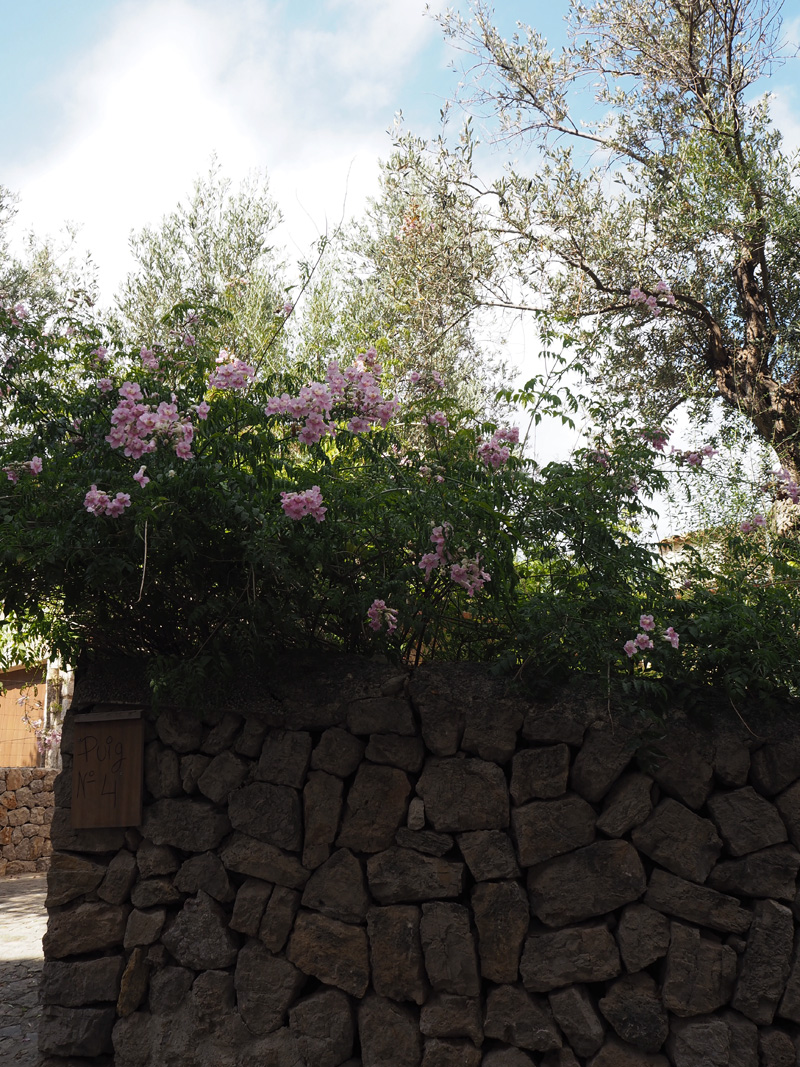 rosycheeks-mallorca-deia-blossoms