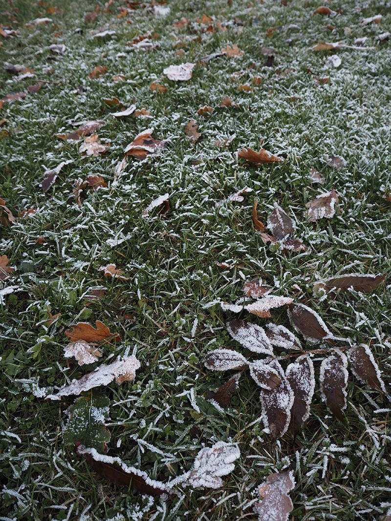 rosycheeks-blog-weissenhaus-frost