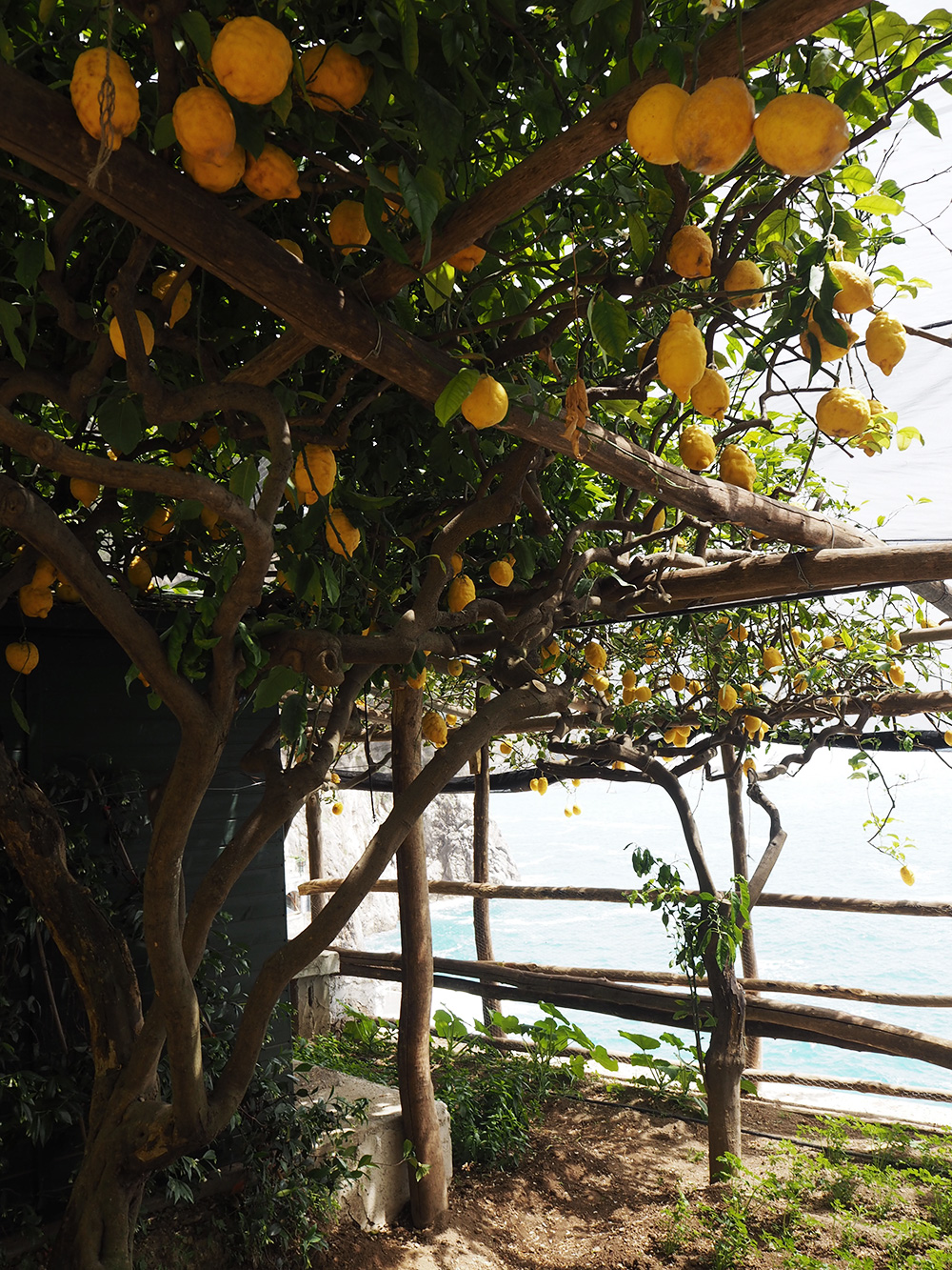 RosyCheeks-Hotel-Santa-Caterina-lemon-grove