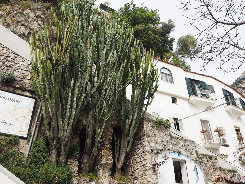 RosyCheeks-Positano-cactus