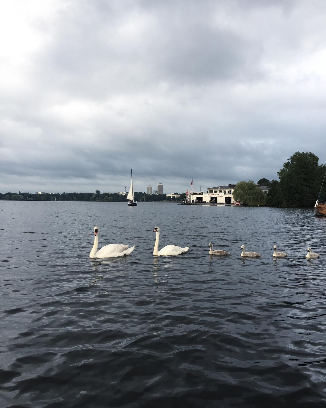 Still cloudy but we sailed with swans and the sunhellip