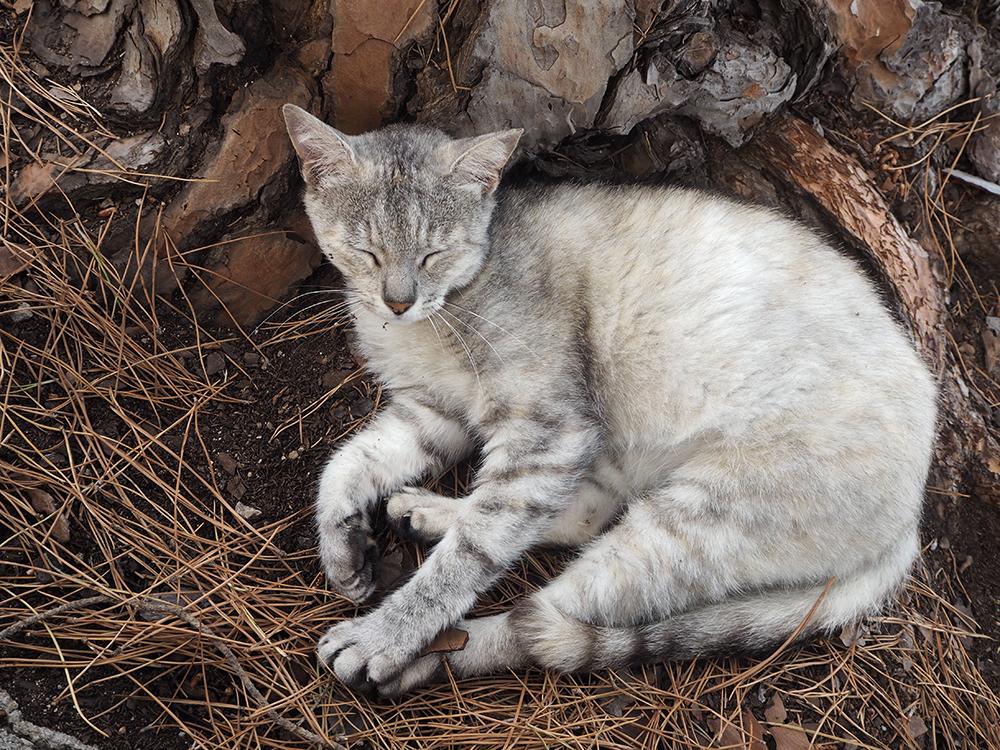 RosyCheeks-Mallorca-arta-cat