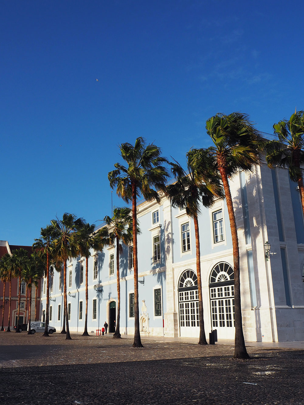 RosyCheeks-lisbon-palm-trees