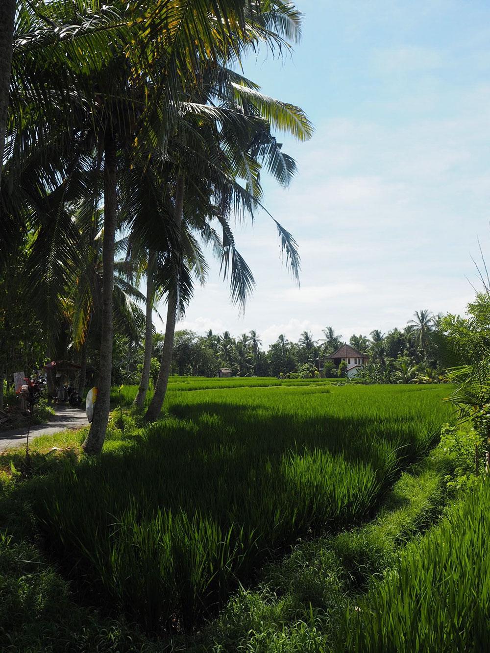 RosyCheeks-Bali-Ubud-Rice-Fields