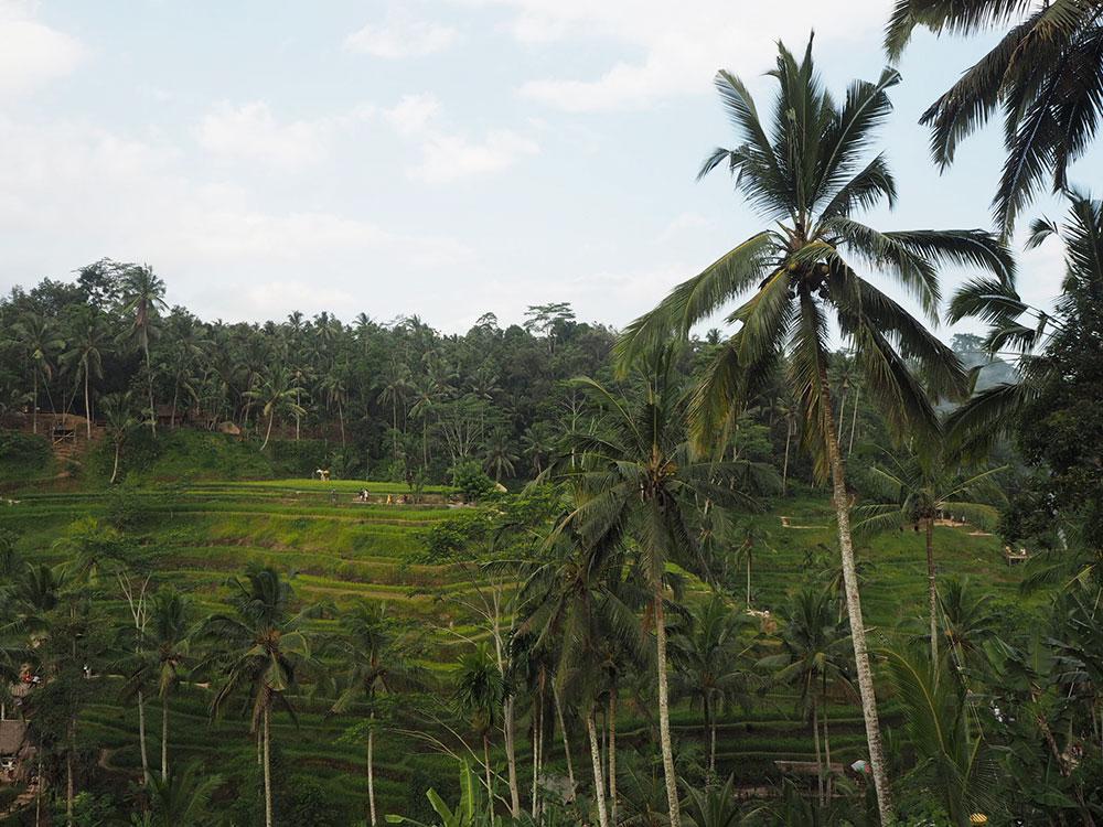 RosyCheeks-Bali-Ubud-Tegallalang