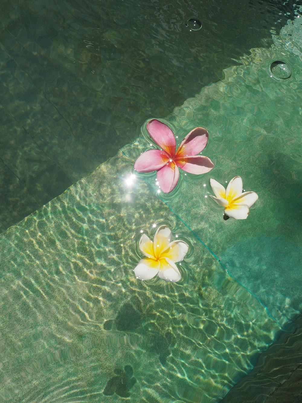 RosyCheeks-Bali-blossoms