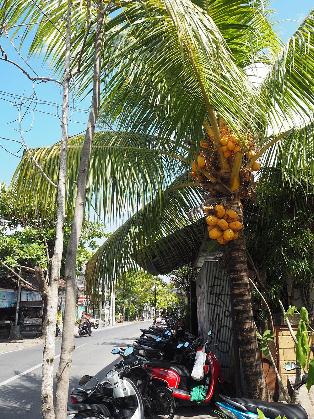 RosyCheeks-Bali-canggu-palm-tree