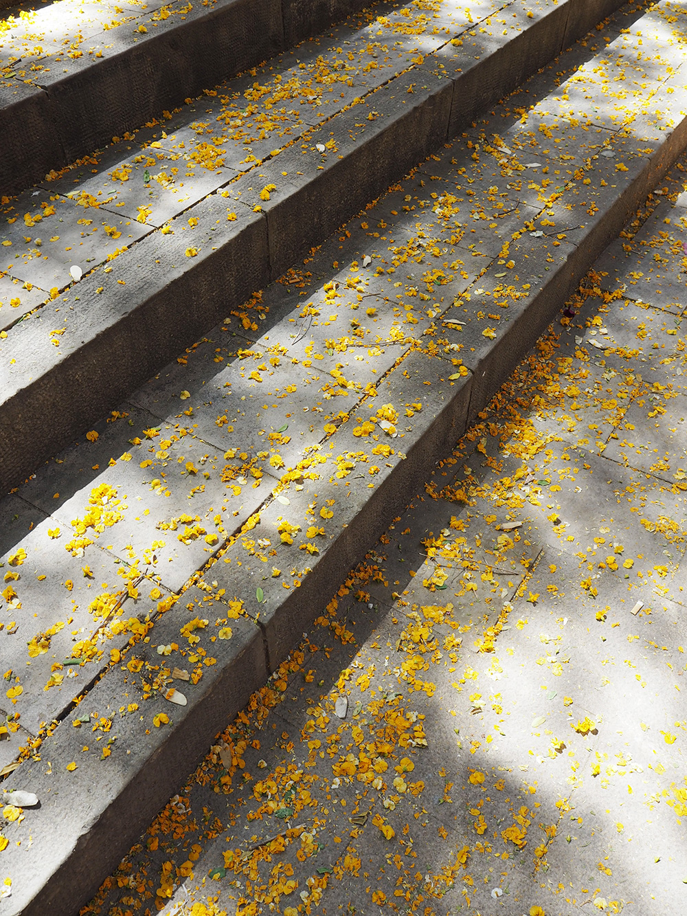 RosyCheeks-Barcelona-blossoms