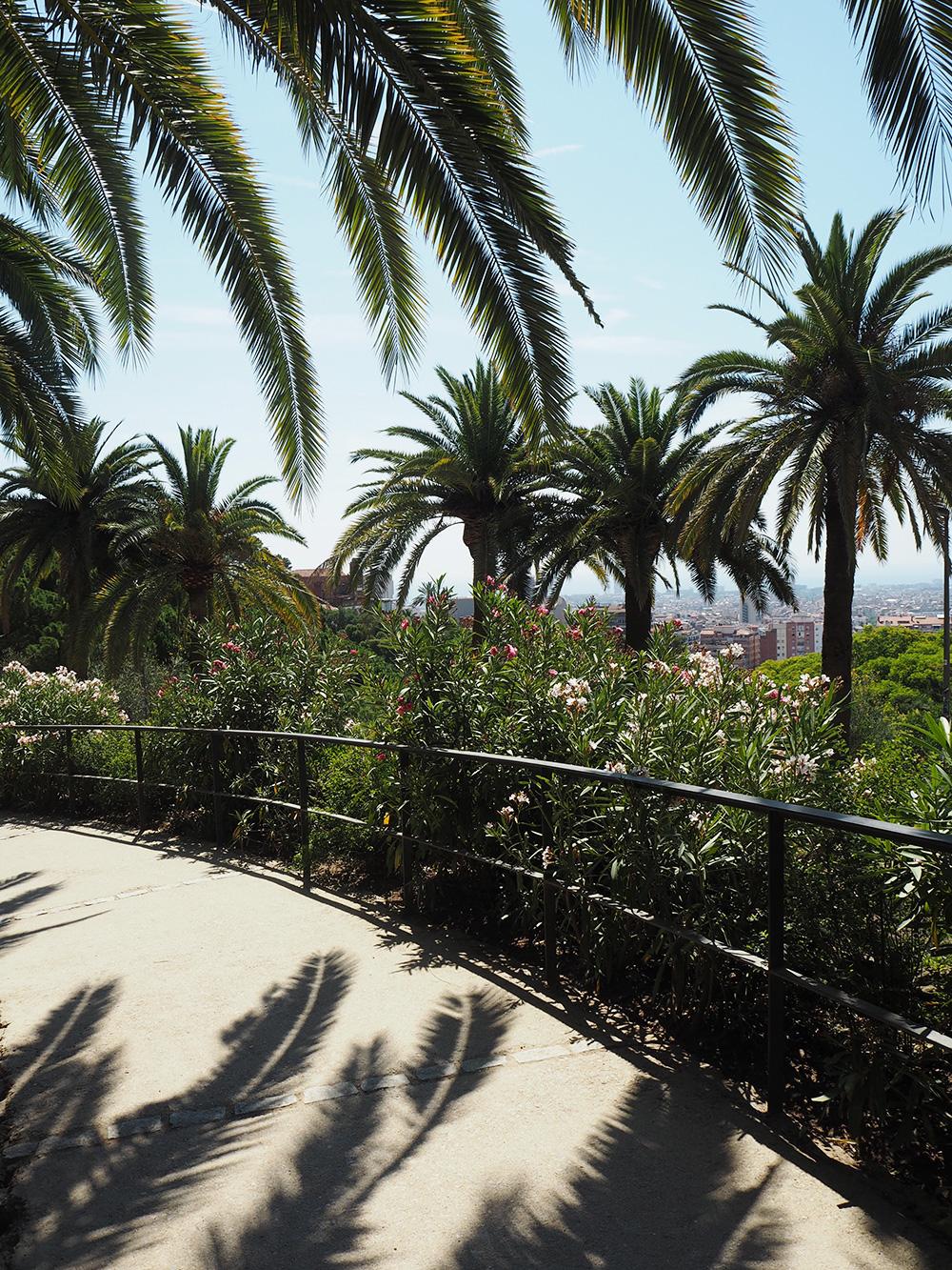 RosyCheeks-Barcelona-palm-trees