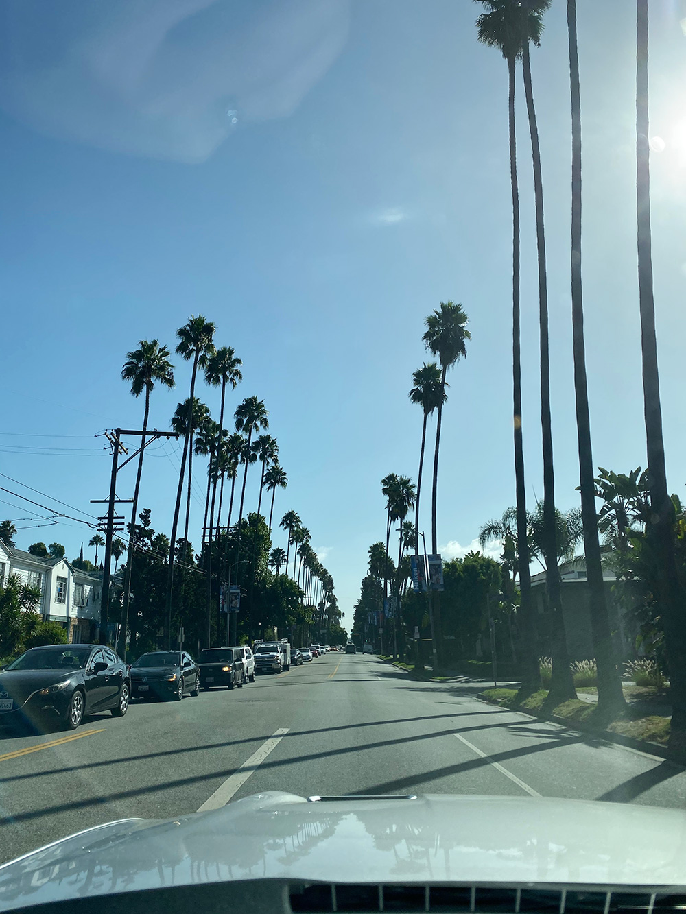 RosyCheeks-Blog-LA-West-Hollywood-Palm-Trees