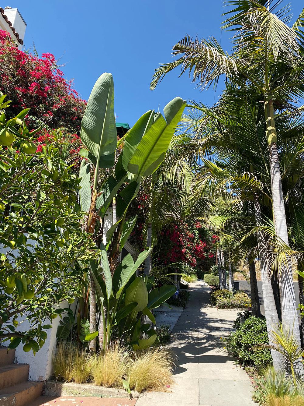 RosyCheeks-Blog-Los-Angeles-Marmont-Garden