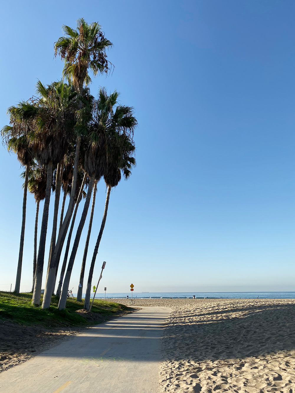 RosyCheeks-Blog-Venice-Beach-Palms