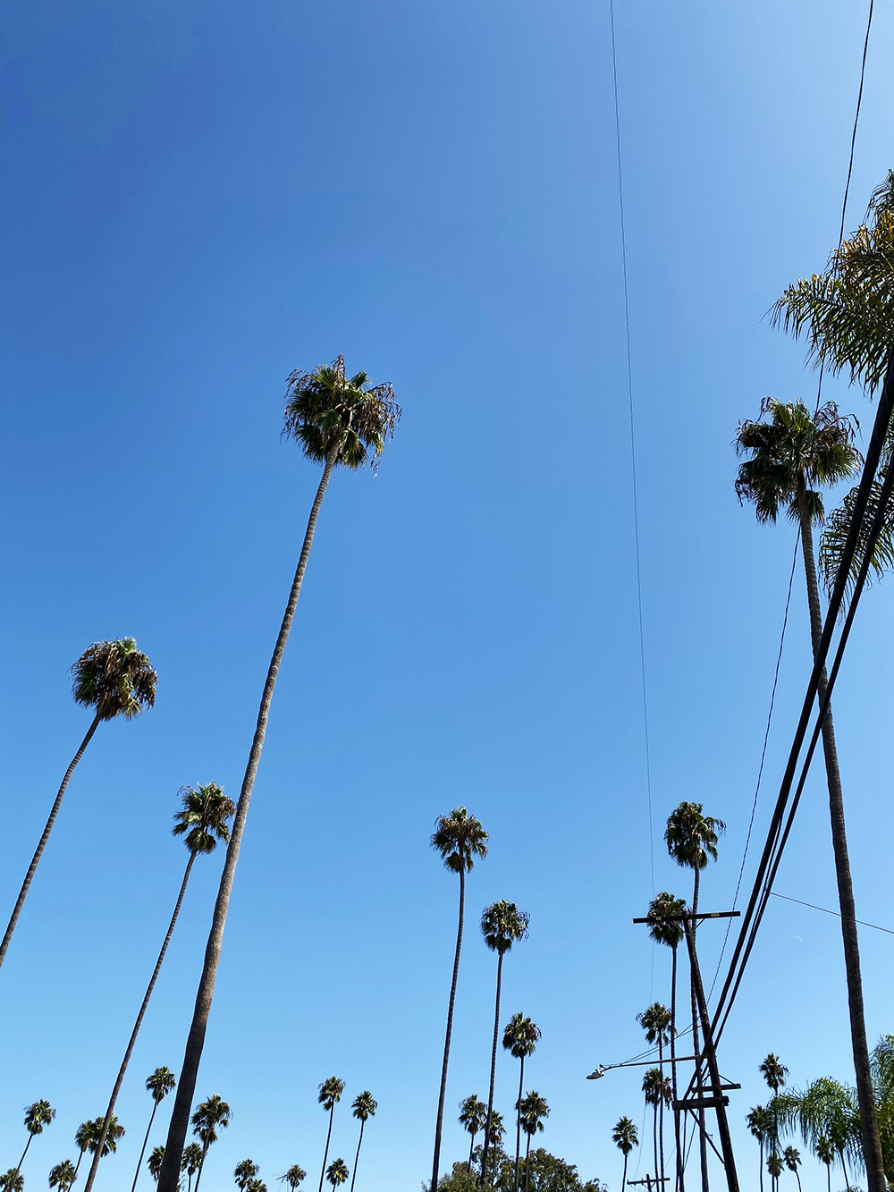 RosyCheeks-Blog-Venice-Palm-Trees