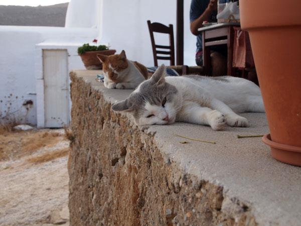 Mykonos_Cats