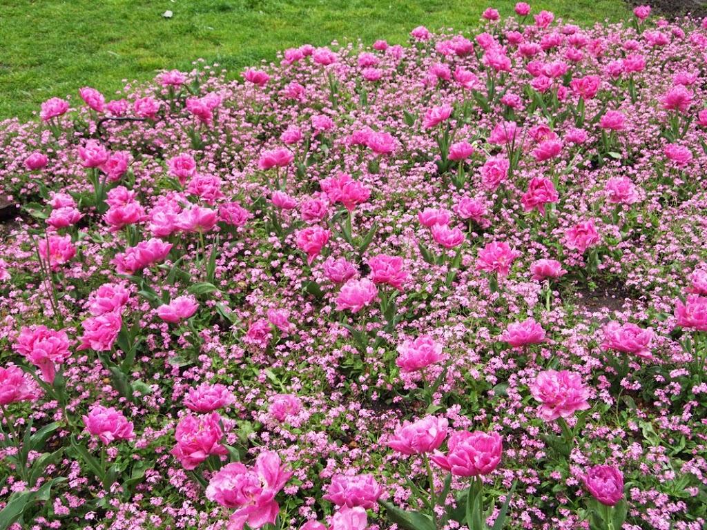 London_Soho_flowers